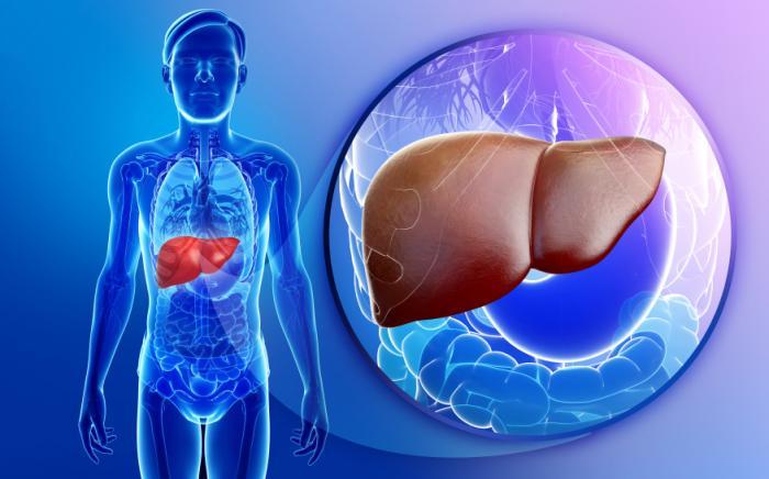 Researchers Predict Widespread Fatty Liver Disease - El Paso Chiropractor