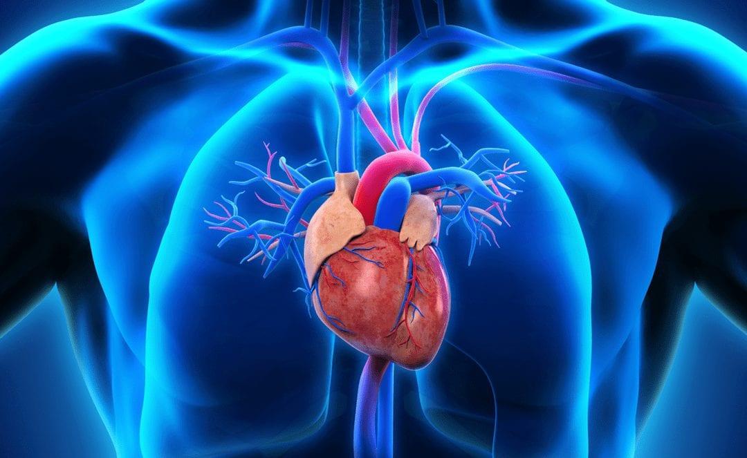Epidemiology & Pathophysiology of Cardiovascular Disease | Wellness Clinic