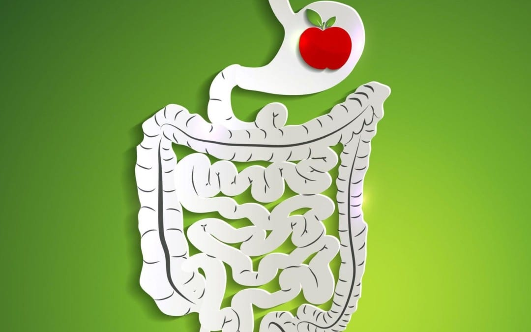 Important Tips for Good Digestive Health | Wellness Clinic