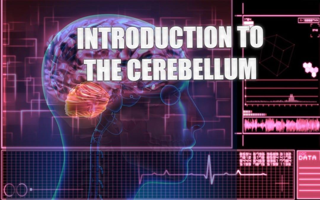 Introduction To The Cerebellum | El Paso, TX. | Part I