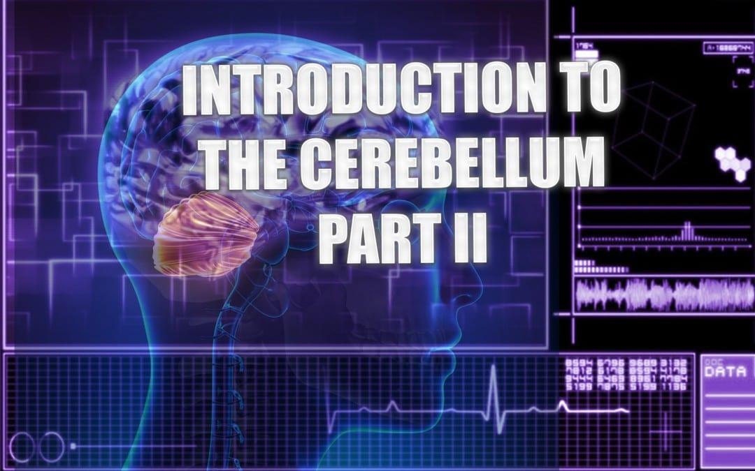 Introduction To The Cerebellum | El Paso, TX. | Part II