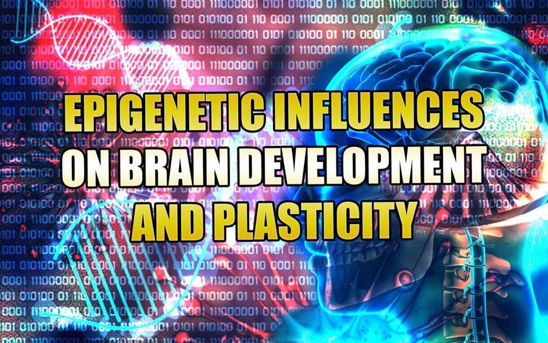 Epigenetic Influences On Brain Development And Plasticity