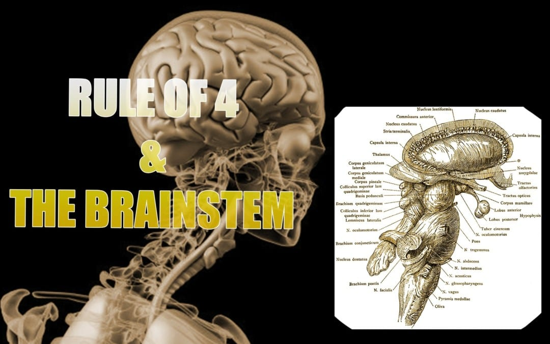 Brainstem And The Rule Of 4 | El Paso, TX.