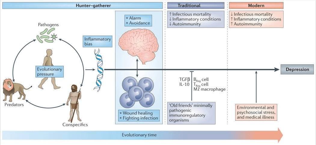 Figure 1 Evolutionary Legacy of an Inflammatory Bias | El Paso, TX Chiropractor