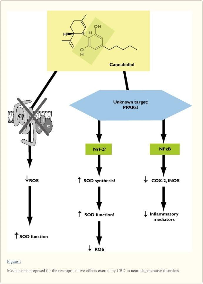 Figure 1 Mechanisms Exerted by CBD