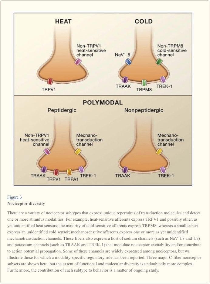 Figure 3 Nociceptor Diversity