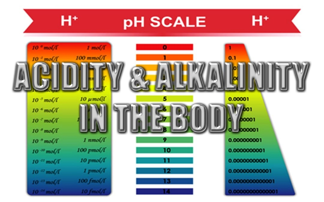 Acidity And Alkalinity In The Body