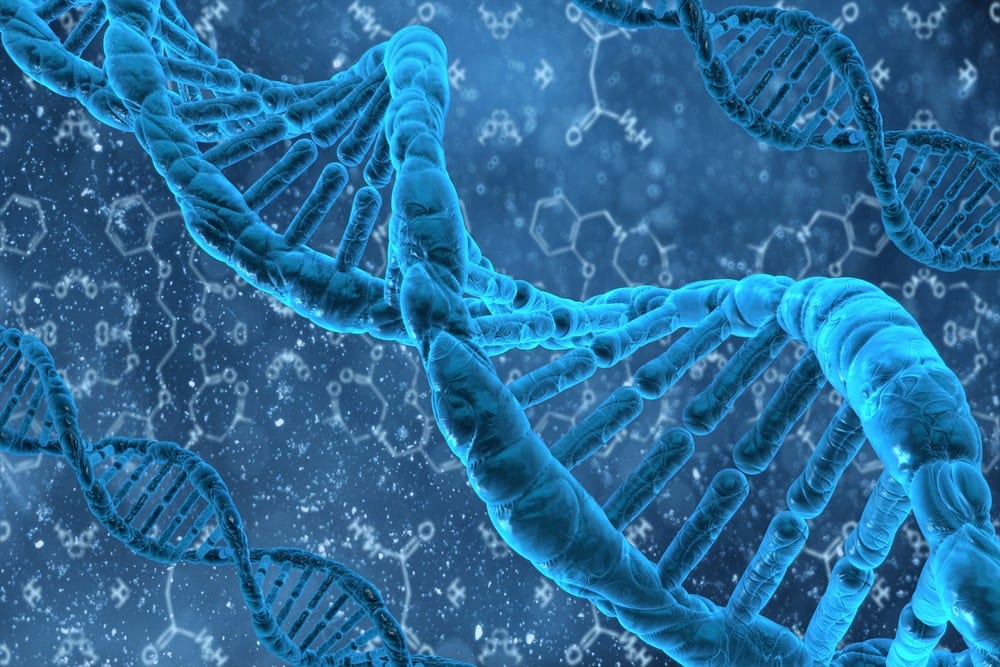 DNA Methylation Plasticity