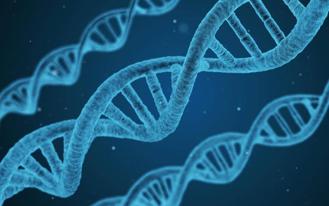 The Importance Of Methylation Support