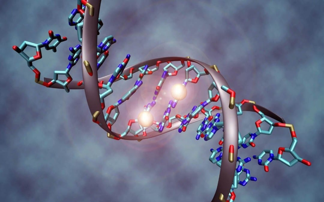Methylation Support For Inflammation And Oxidative Stress