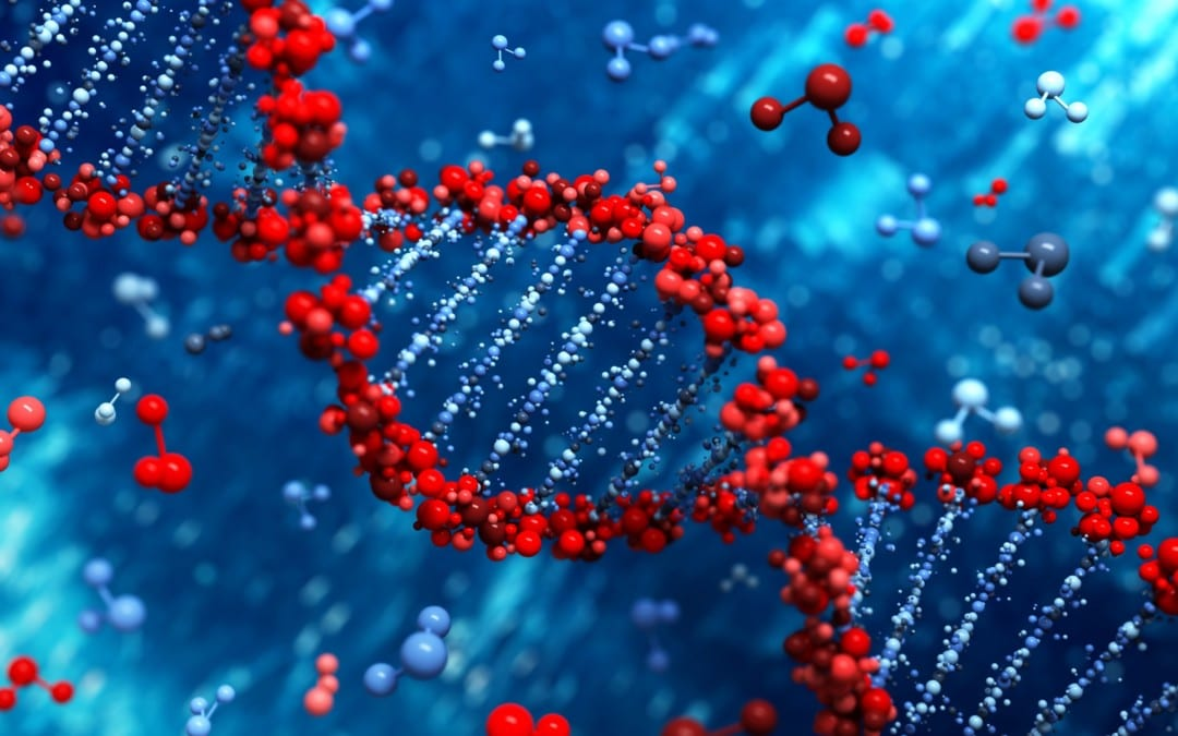 The Role of Methylation Adaptogens