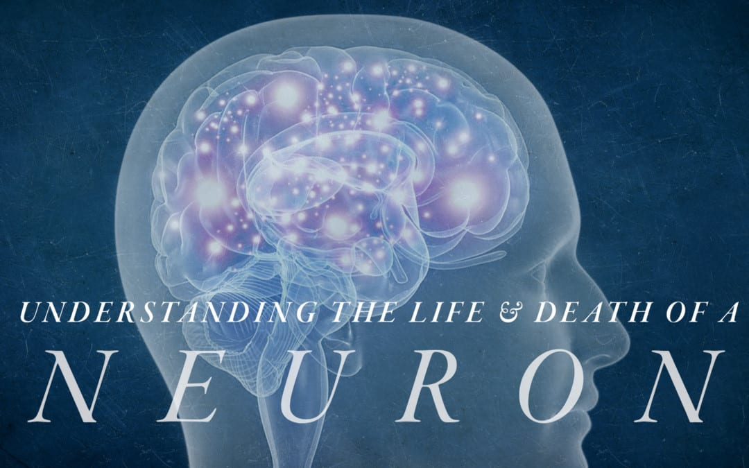 Understanding the Life and Death of a Neuron