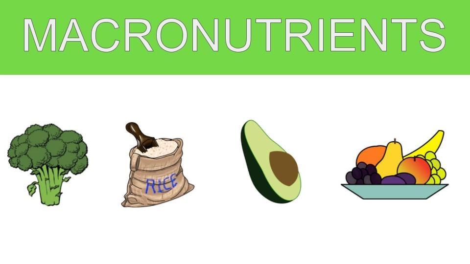 Macronutrients and Health