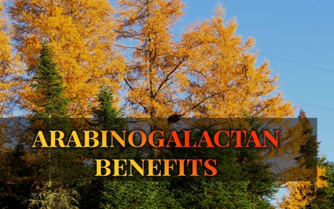 Arabinogalactan The Immune and Gut Enhancer