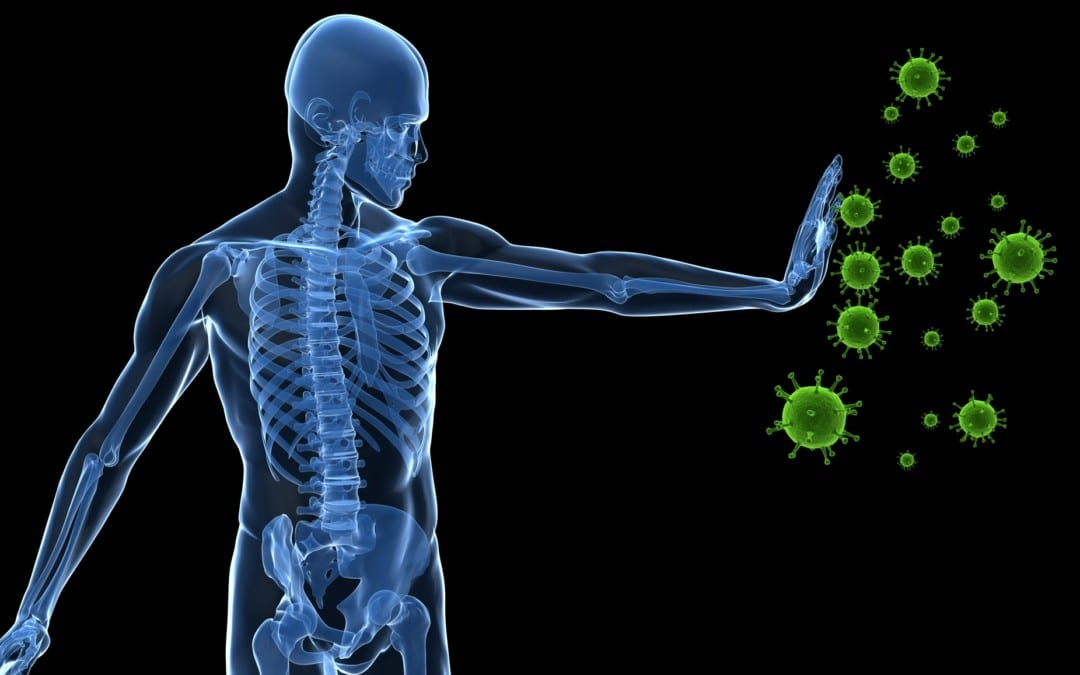 The Factors Of Increased Immunity