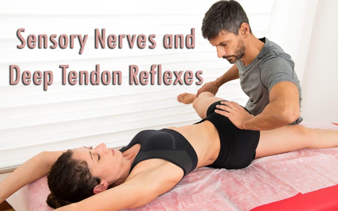 Sensory Nerves and Deep Tendon Reflexes