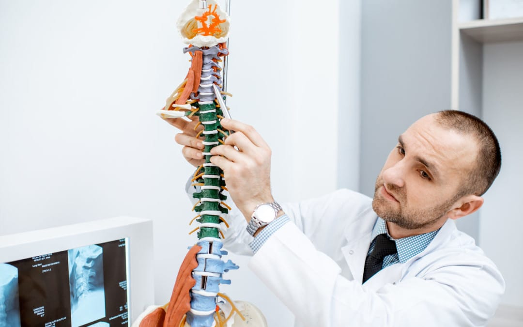 The Importance Of The Spine's Curvature